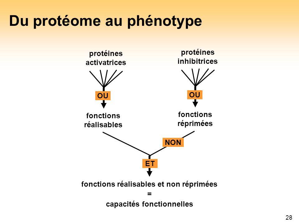 28 Du protéome au phénotype protéines activatrices protéines inhibitrices OU fonctions réalisables fonctions réprimées fonctions réalisables et non ré