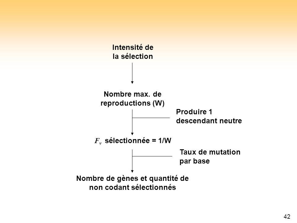 42 F ν sélectionnée = 1/W Intensité de la sélection Nombre max. de reproductions (W) Nombre de gènes et quantité de non codant sélectionnés Produire 1