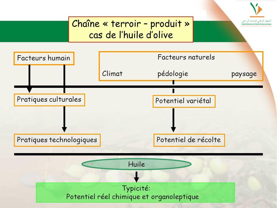 Chaîne « terroir – produit » cas de lhuile dolive Facteurs humain Facteurs naturels Climatpédologie paysage Pratiques culturales Pratiques technologiq