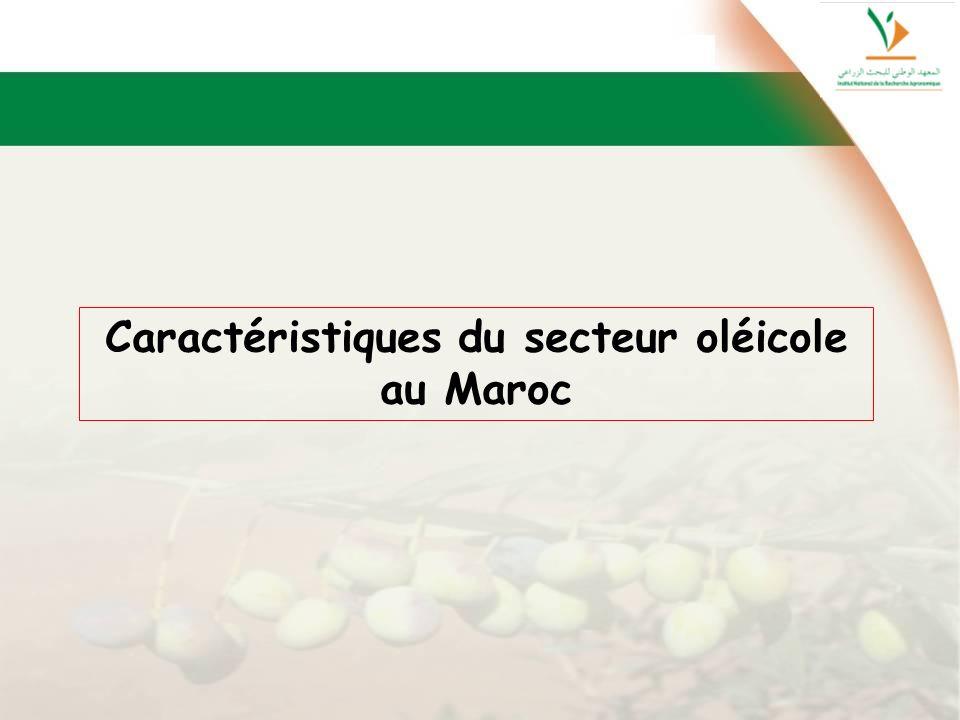 Caractéristiques du secteur oléicole au Maroc