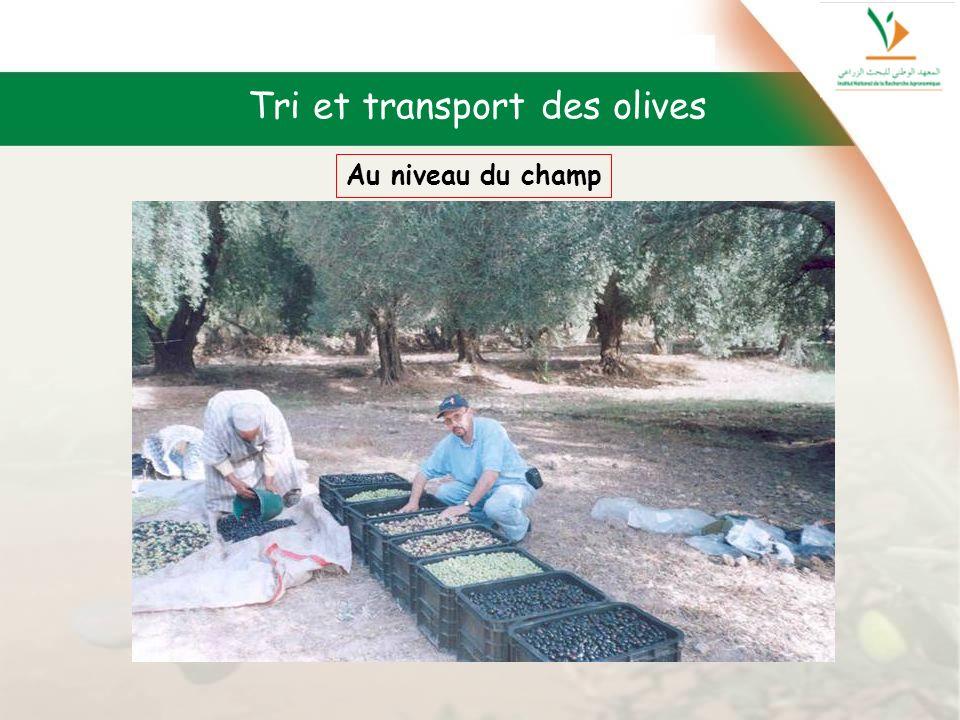 Tri et transport des olives Au niveau du champ
