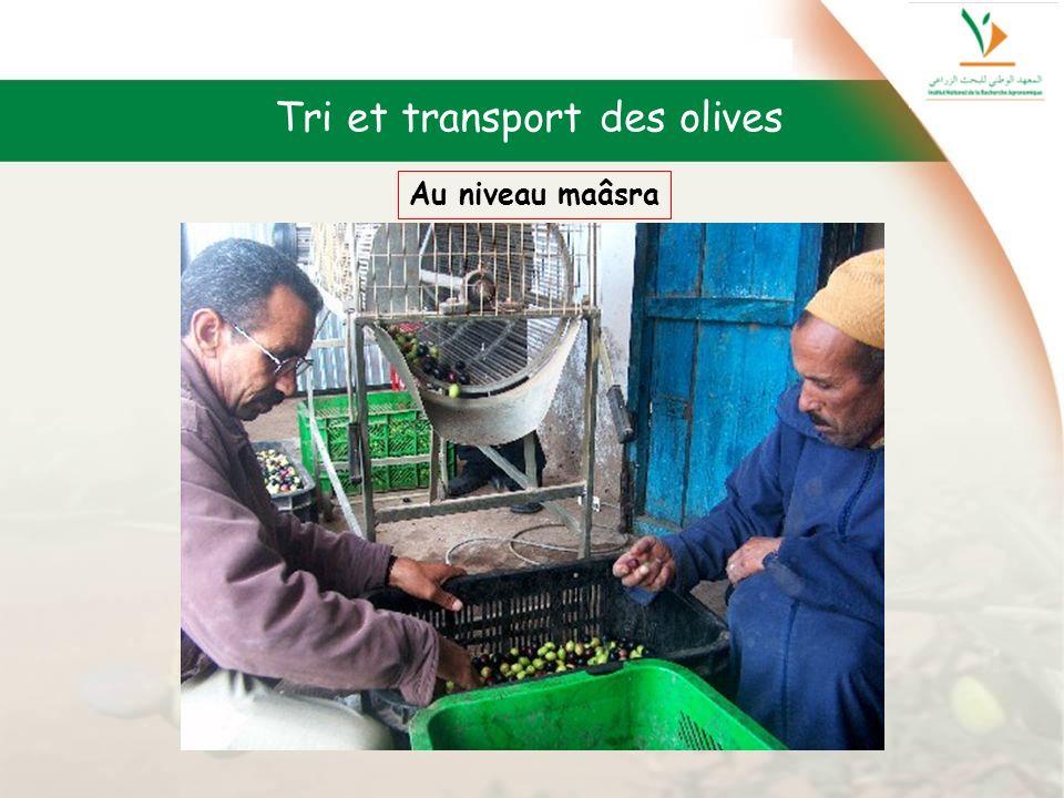 Tri et transport des olives Au niveau maâsra