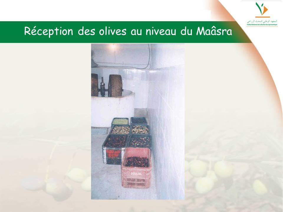 Réception des olives au niveau du Maâsra
