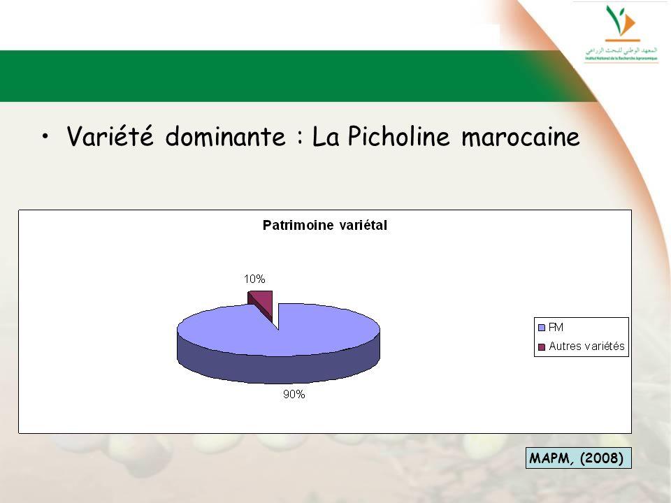 Variété dominante : La Picholine marocaine MAPM, (2008)