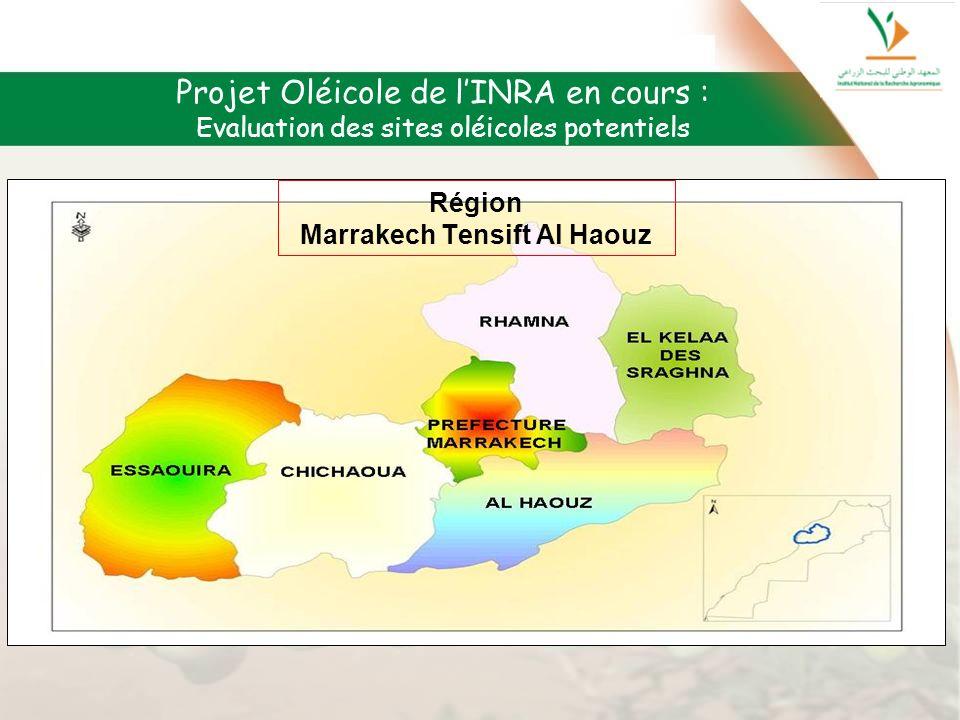 Projet Oléicole de lINRA en cours : Evaluation des sites oléicoles potentiels Région Marrakech Tensift Al Haouz