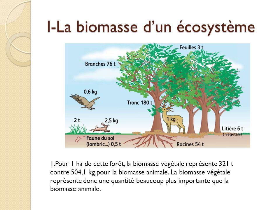 I-La biomasse dun écosystème 1.Pour 1 ha de cette forêt, la biomasse végétale représente 321 t contre 504,1 kg pour la biomasse animale. La biomasse v