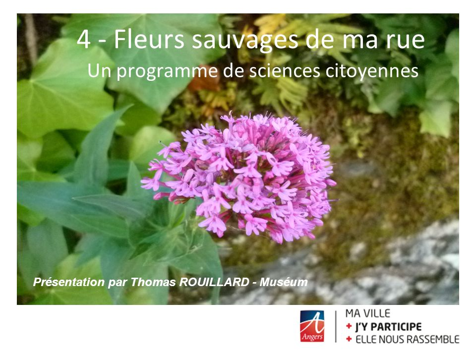 4 - Fleurs sauvages de ma rue Un programme de sciences citoyennes Présentation par Thomas ROUILLARD - Muséum