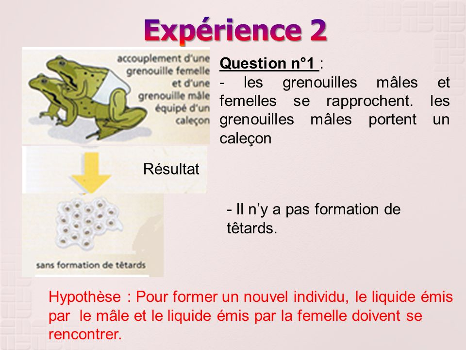 Résultat Question n°1 : - les grenouilles mâles et femelles se rapprochent. les grenouilles mâles portent un caleçon - Il ny a pas formation de têtard