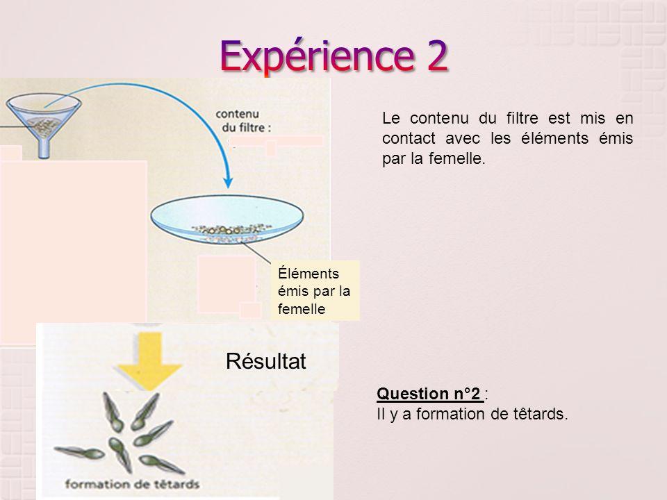 Éléments émis par la femelle Résultat Le contenu du filtre est mis en contact avec les éléments émis par la femelle. Question n°2 : Il y a formation d