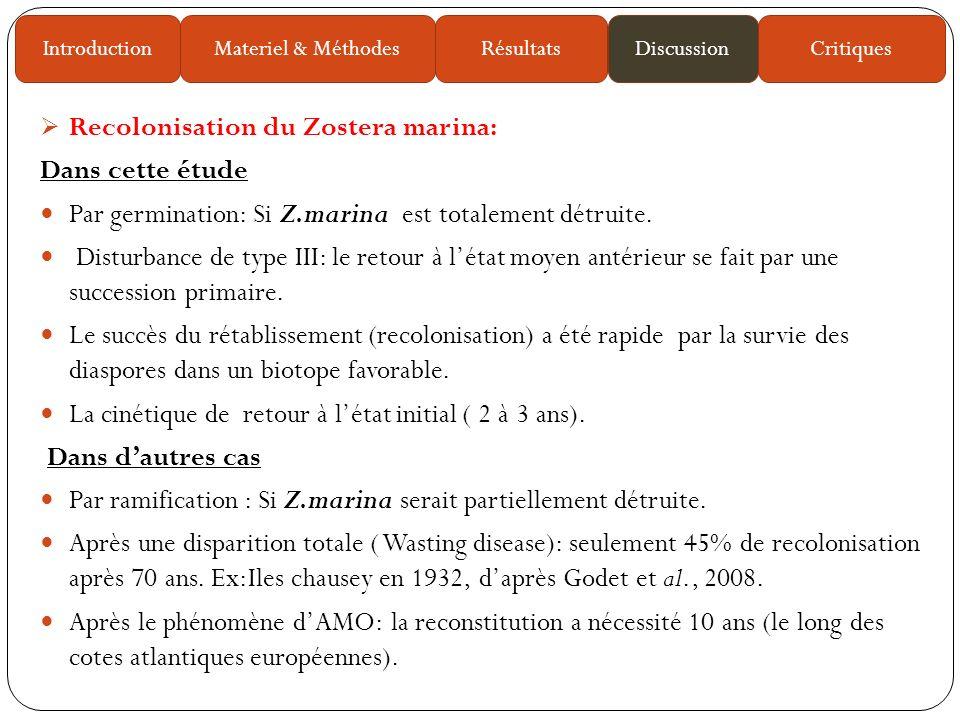 Recolonisation du Zostera marina: Dans cette étude Par germination: Si Z.marina est totalement détruite.