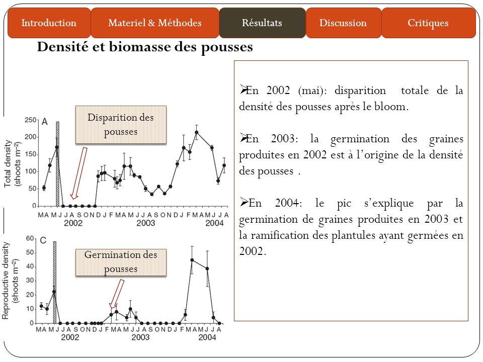 En 2002 (mai): disparition totale de la densité des pousses après le bloom.