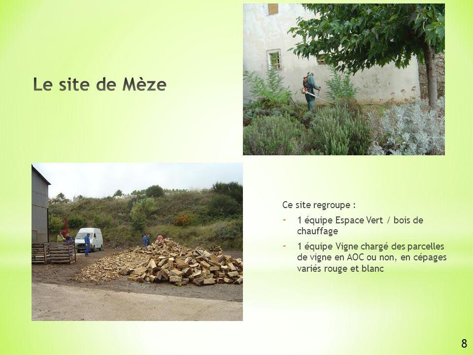 Ce site regroupe : - 1 équipe Espace Vert / bois de chauffage - 1 équipe Vigne chargé des parcelles de vigne en AOC ou non, en cépages variés rouge et blanc 8