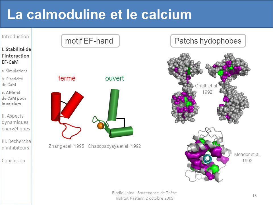 15 Elodie Laine - Soutenance de Thèse Institut Pasteur, 2 octobre 2009 Introduction I.