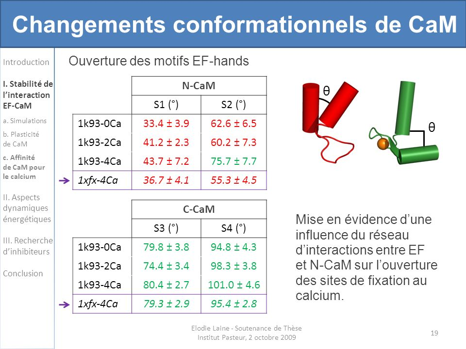 19 Changements conformationnels de CaM Introduction I. Stabilité de linteraction EF-CaM a. Simulations b. Plasticité de CaM c. Affinité de CaM pour le