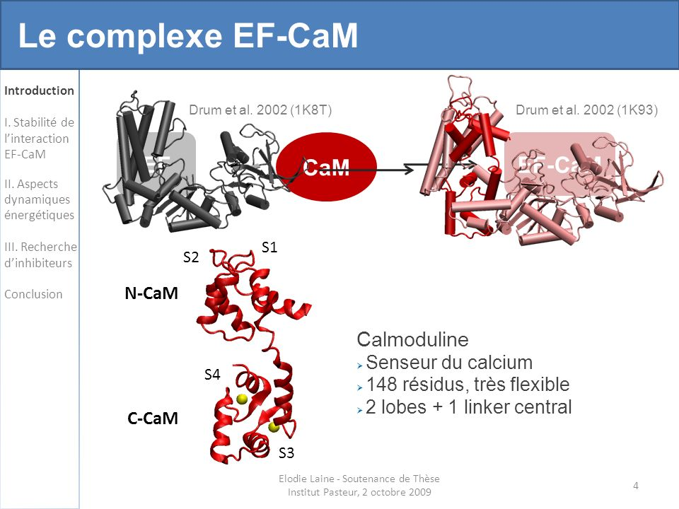 65 Robustesse de la poche Elodie Laine - Soutenance de Thèse Institut Pasteur, 2 octobre 2009
