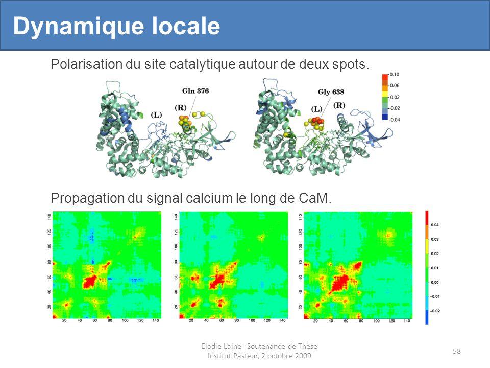 58 Dynamique locale Polarisation du site catalytique autour de deux spots.