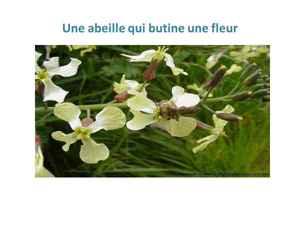 Une abeille qui butine une fleur http://www.ec44.scolanet.org/tice/jpg/doc/moutarde.htm