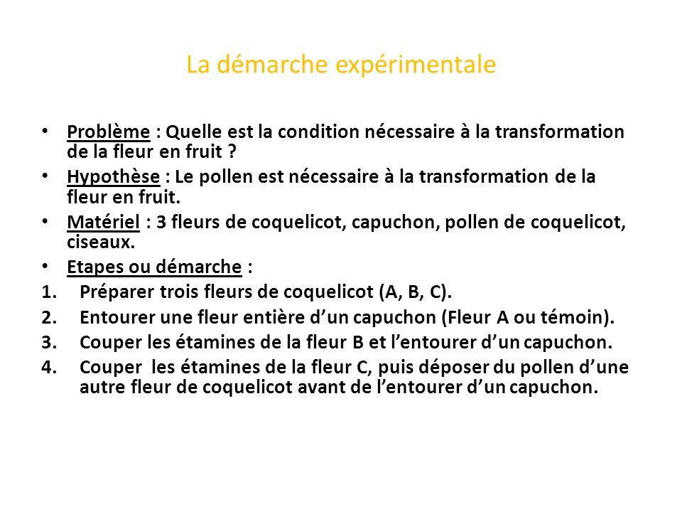 La démarche expérimentale Problème : Quelle est la condition nécessaire à la transformation de la fleur en fruit ? Hypothèse : Le pollen est nécessair