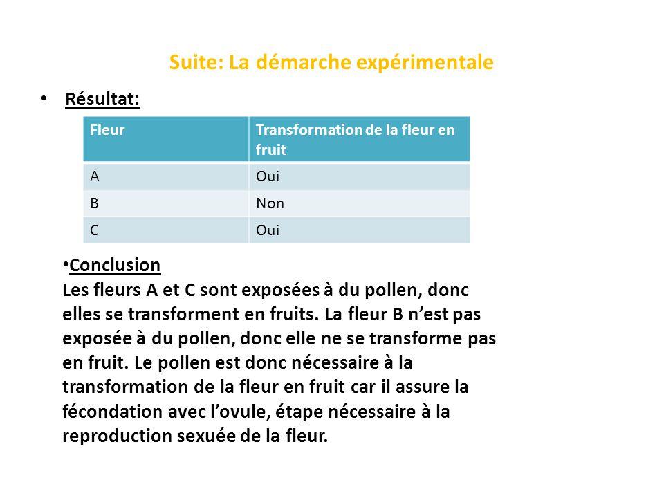 Suite: La démarche expérimentale Résultat: FleurTransformation de la fleur en fruit AOui BNon COui Conclusion Les fleurs A et C sont exposées à du pol