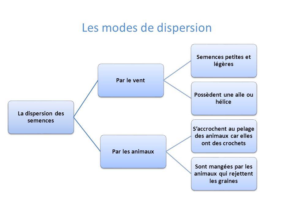 Les modes de dispersion La dispersion des semences Par le vent Semences petites et légères Possèdent une aile ou hélice Par les animaux Saccrochent au
