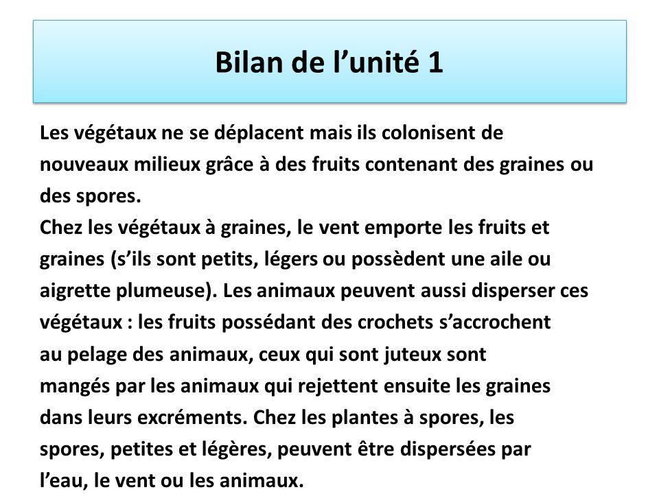 Bilan de lunité 1 Les végétaux ne se déplacent mais ils colonisent de nouveaux milieux grâce à des fruits contenant des graines ou des spores. Chez le