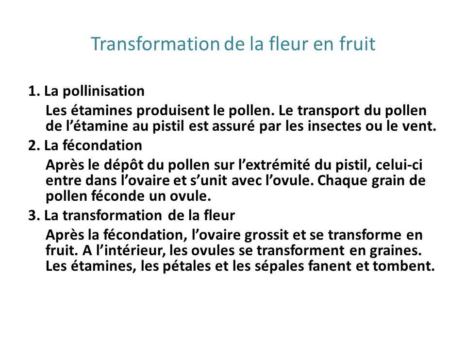 Transformation de la fleur en fruit 1. La pollinisation Les étamines produisent le pollen. Le transport du pollen de létamine au pistil est assuré par