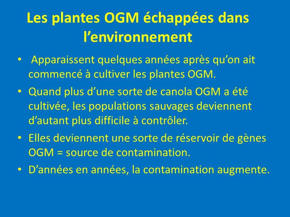 Les plantes OGM échappées dans lenvironnement Apparaissent quelques années après quon ait commencé à cultiver les plantes OGM. Quand plus dune sorte d