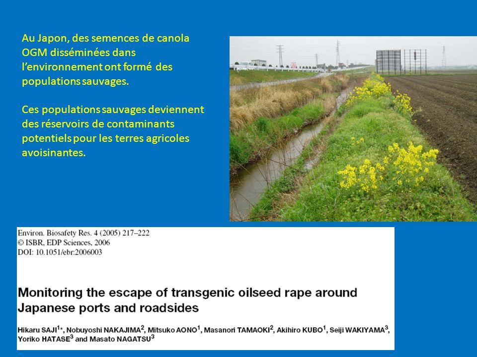 Au Japon, des semences de canola OGM disséminées dans lenvironnement ont formé des populations sauvages. Ces populations sauvages deviennent des réser