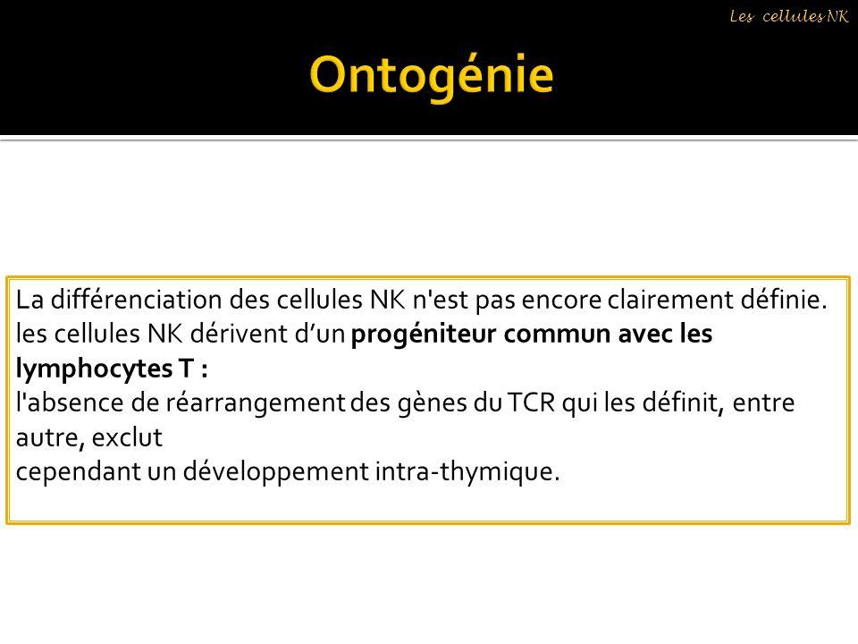 La différenciation des cellules NK n'est pas encore clairement définie. les cellules NK dérivent dun progéniteur commun avec les lymphocytes T : l'abs