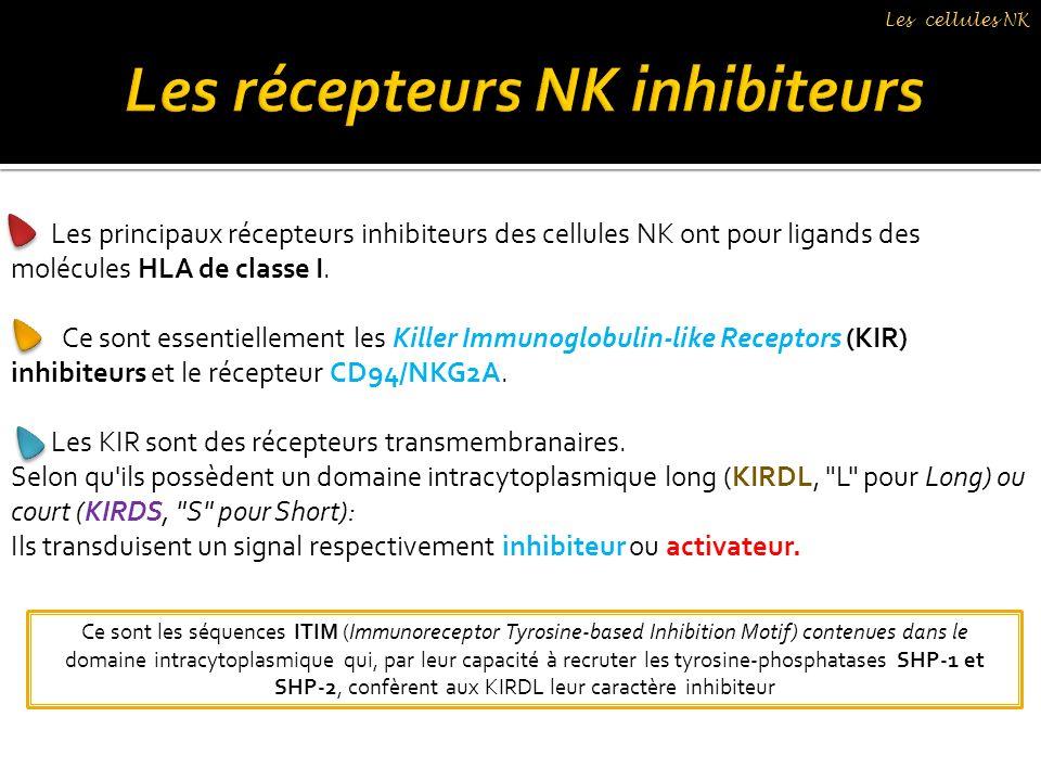 Les principaux récepteurs inhibiteurs des cellules NK ont pour ligands des molécules HLA de classe I. Ce sont essentiellement les Killer Immunoglobuli