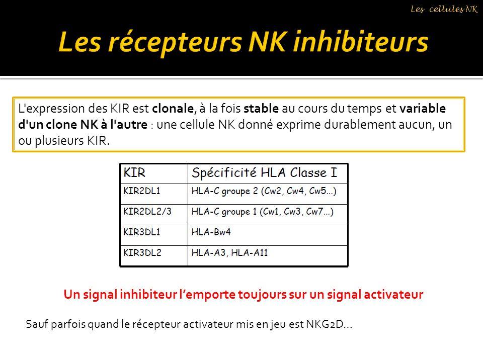 L'expression des KIR est clonale, à la fois stable au cours du temps et variable d'un clone NK à l'autre : une cellule NK donné exprime durablement au