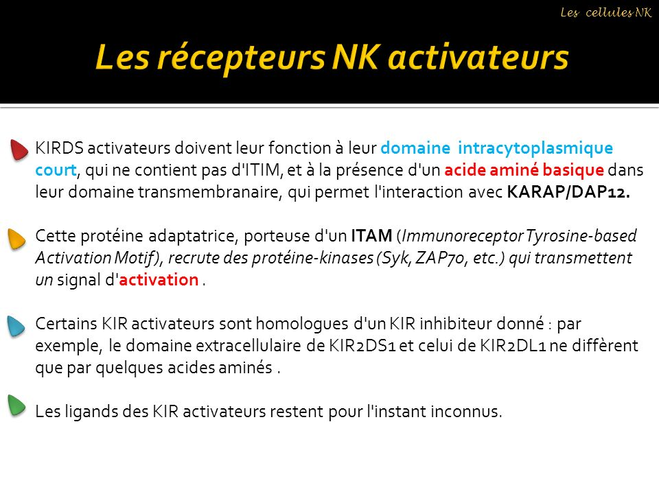 KIRDS activateurs doivent leur fonction à leur domaine intracytoplasmique court, qui ne contient pas d'ITIM, et à la présence d'un acide aminé basique