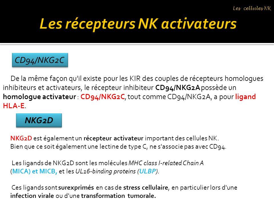 De la même façon qu'il existe pour les KIR des couples de récepteurs homologues inhibiteurs et activateurs, le récepteur inhibiteur CD94/NKG2A possède