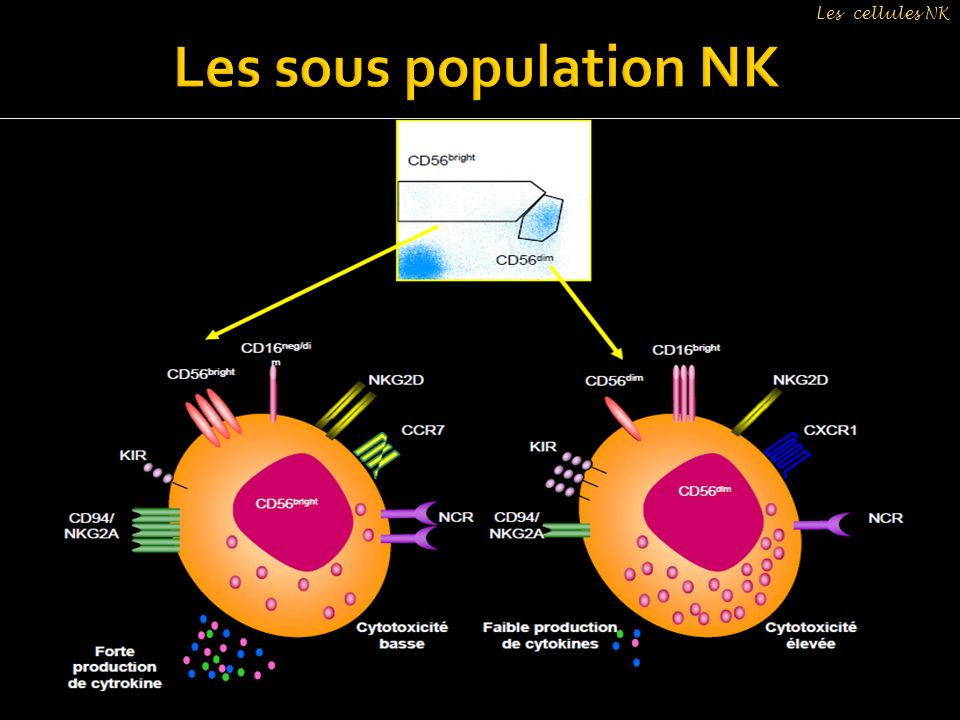 Les cellules NK