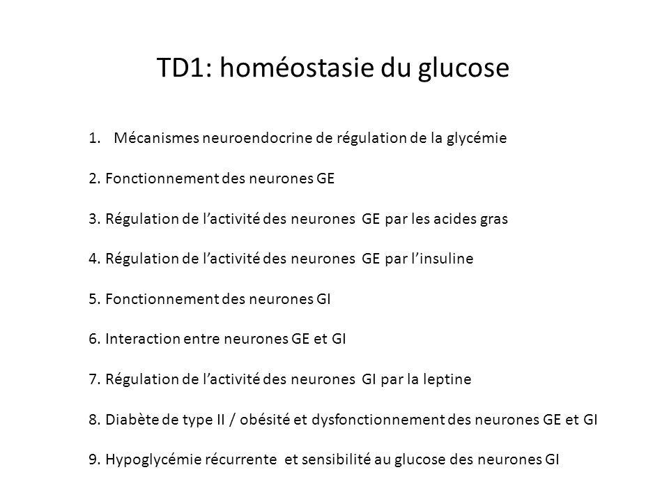 TD1: homéostasie du glucose 1.Mécanismes neuroendocrine de régulation de la glycémie 2. Fonctionnement des neurones GE 3. Régulation de lactivité des