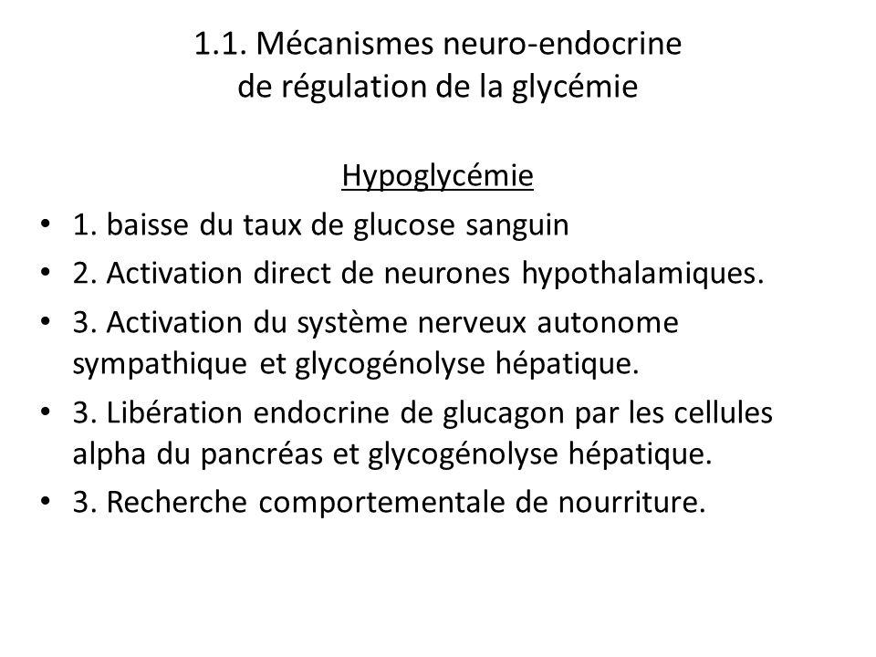 1.1. Mécanismes neuro-endocrine de régulation de la glycémie Hypoglycémie 1. baisse du taux de glucose sanguin 2. Activation direct de neurones hypoth