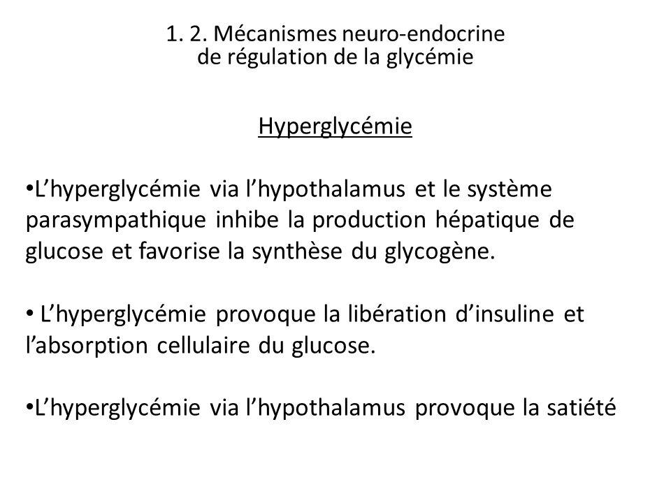 Hyperglycémie Lhyperglycémie via lhypothalamus et le système parasympathique inhibe la production hépatique de glucose et favorise la synthèse du glyc