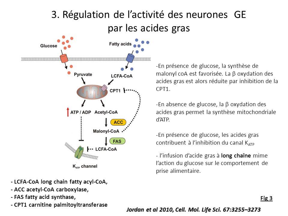 Jordan et al 2010, Cell. Mol. Life Sci. 67:3255–3273 Fig 3 -En présence de glucose, la synthèse de malonyl coA est favorisée. La oxydation des acides