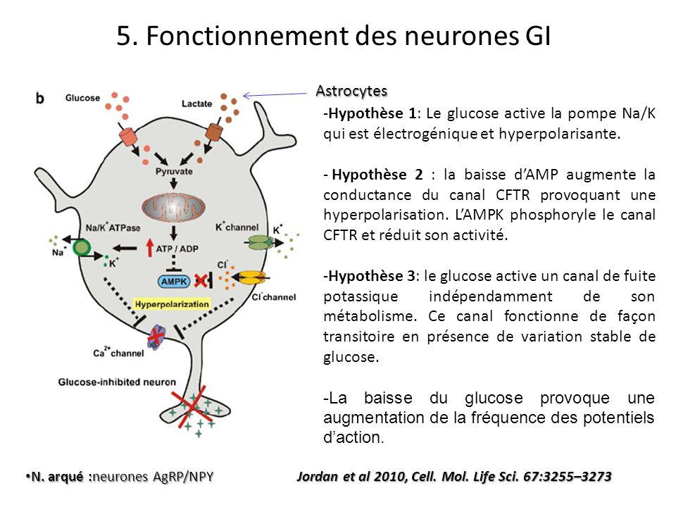 N. arqué :neurones AgRP/NPY N. arqué :neurones AgRP/NPY Jordan et al 2010, Cell. Mol. Life Sci. 67:3255–3273 Astrocytes -Hypothèse 1: Le glucose activ