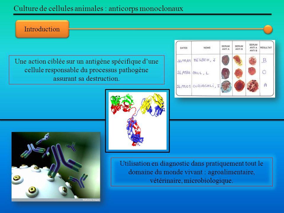 Culture de cellules animales : anticorps monoclonaux Introduction Utilisation en diagnostic dans pratiquement tout le domaine du monde vivant : agroal