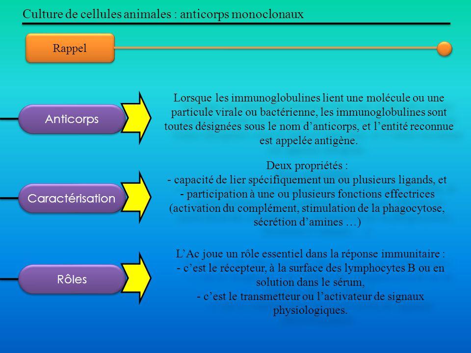 Culture de cellules animales : anticorps monoclonaux Rappel Lorsque les immunoglobulines lient une molécule ou une particule virale ou bactérienne, le