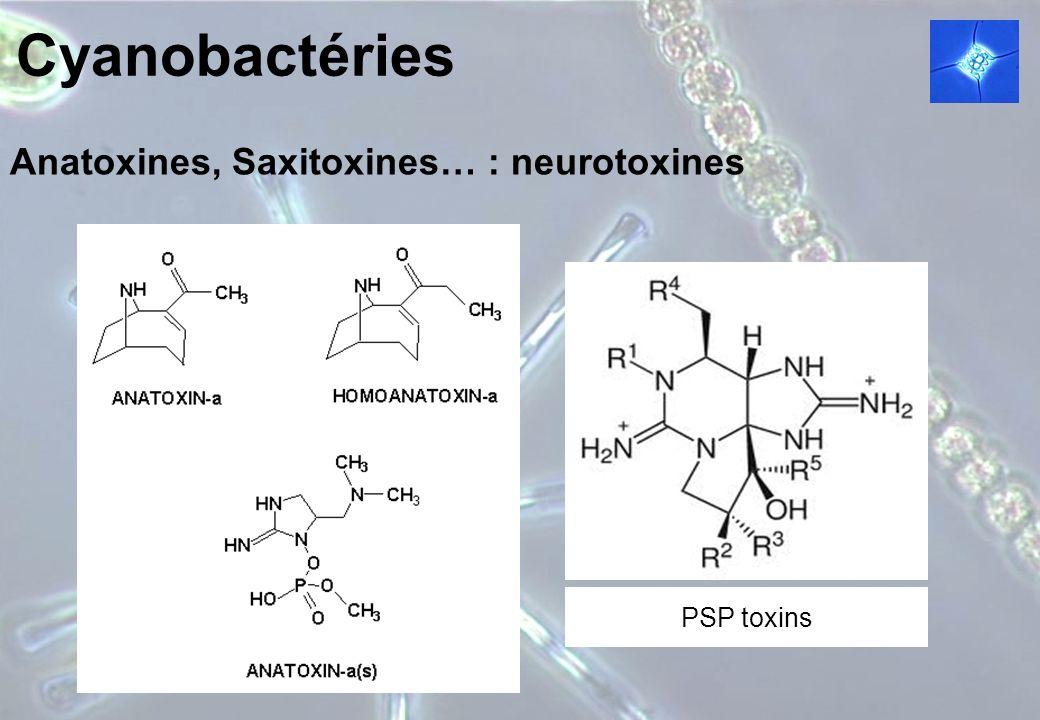 Cyanobactéries Anatoxines, Saxitoxines… : neurotoxines PSP toxins
