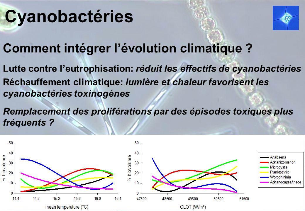 Cyanobactéries Comment intégrer lévolution climatique ? Lutte contre leutrophisation: réduit les effectifs de cyanobactéries Réchauffement climatique:
