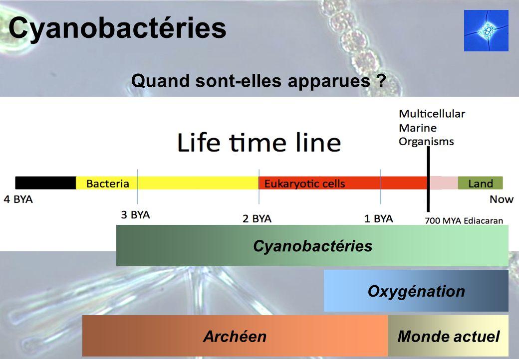 Cyanobactéries Quand sont-elles apparues ? Cyanobactéries Oxygénation Monde actuelArchéen
