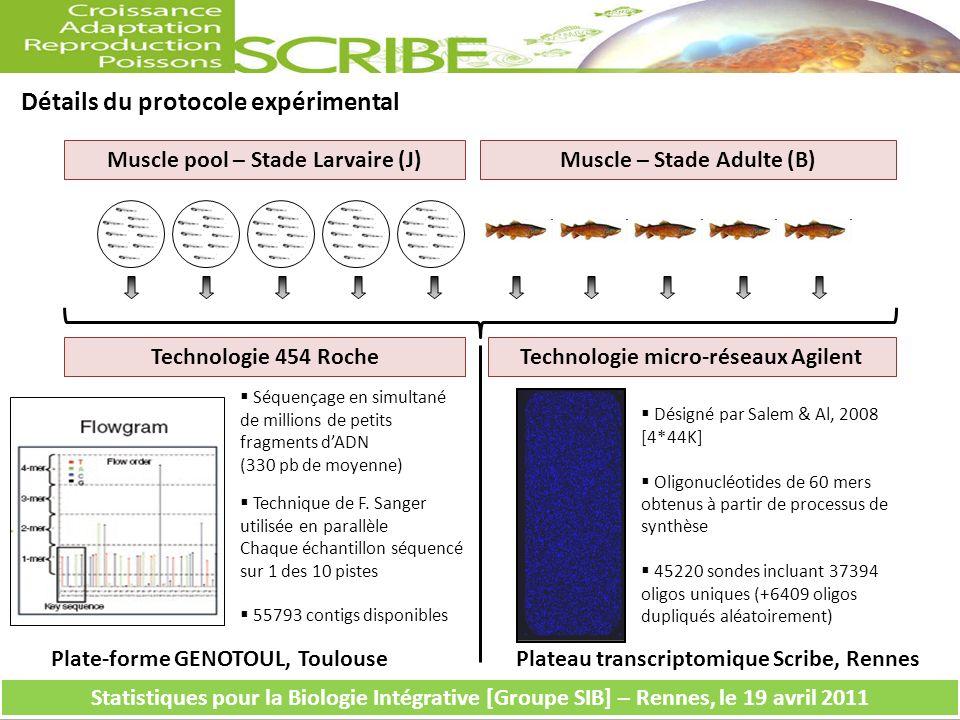 Détails du protocole expérimental Muscle pool – Stade Larvaire (J)Muscle – Stade Adulte (B) Séquençage en simultané de millions de petits fragments dADN (330 pb de moyenne) Technique de F.