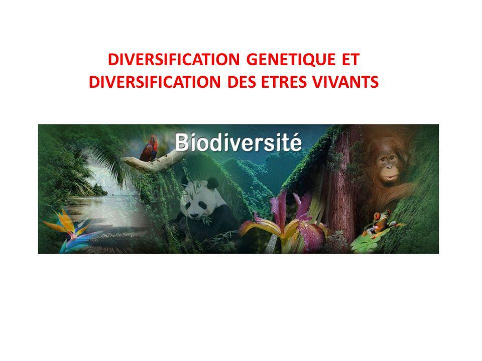 DIVERSIFICATION GENETIQUE ET DIVERSIFICATION DES ETRES VIVANTS
