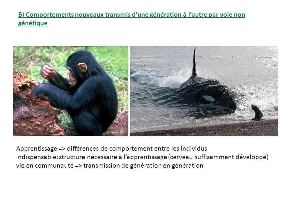 B) Comportements nouveaux transmis dune génération à lautre par voie non génétique Apprentissage => différences de comportement entre les individus In