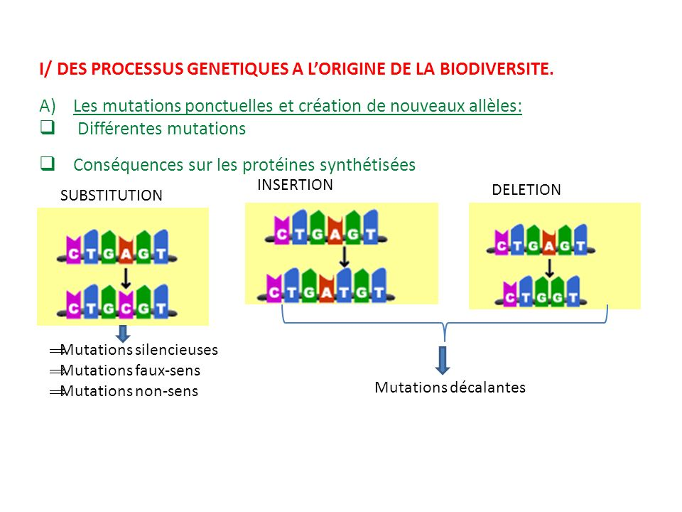 I/ DES PROCESSUS GENETIQUES A LORIGINE DE LA BIODIVERSITE. A)Les mutations ponctuelles et création de nouveaux allèles: Différentes mutations SUBSTITU