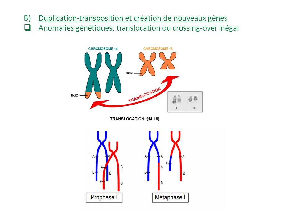Exemple des légumineuses: Intérêt pour la légumineuse: utilisation de lazote atmosphérique fixé par les bactéries (meilleure nutrition azotée) Intérêt pour les bactéries: milieu protégé Rq: présence de Leghémoglobine qui fixe l oxygène, ce qui protège la nitrogénase bactérienne qui est inhibée par l oxygène.