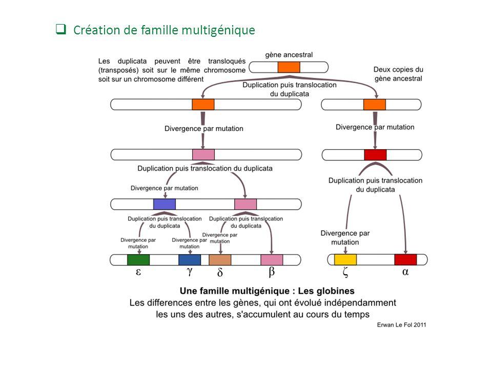 Création de famille multigénique